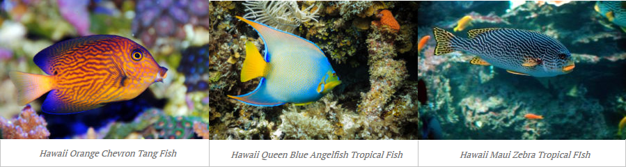 Hawaiian Tropical Fish Examples