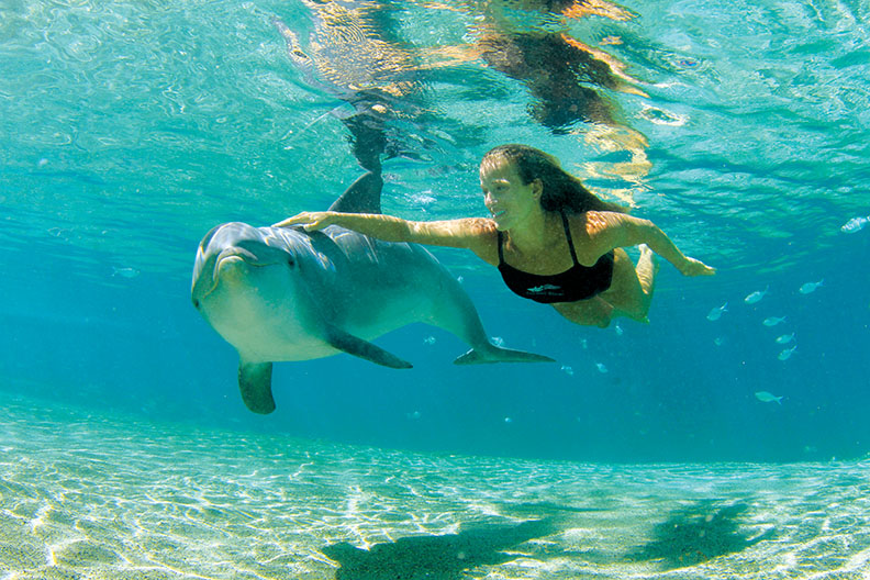 Maui Snorkeling Tours with Dolphins